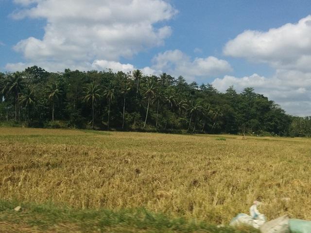 ボホール島の田園風景