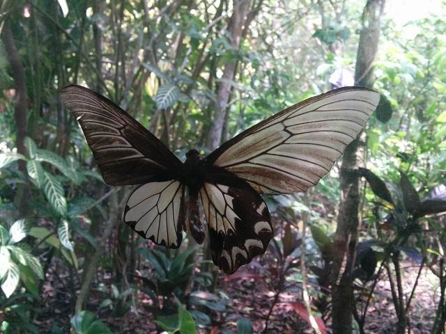 大きなアゲハ蝶もたくさんいます