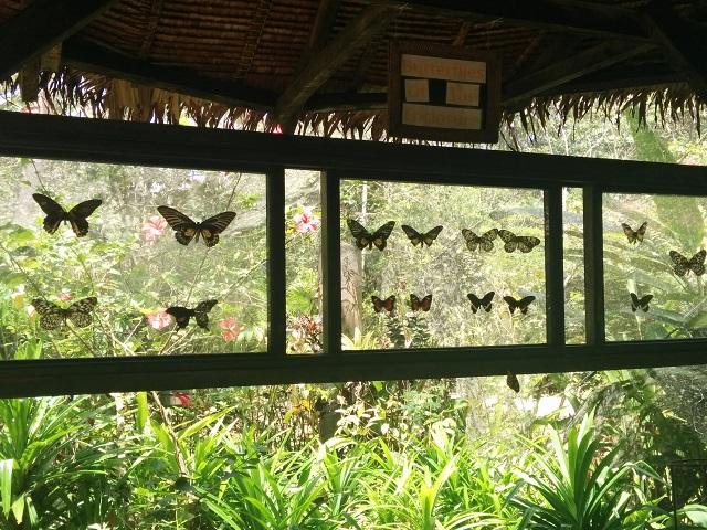 蝶々の標本がありました