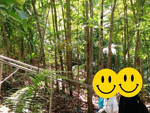 ターシャーの森を行きます