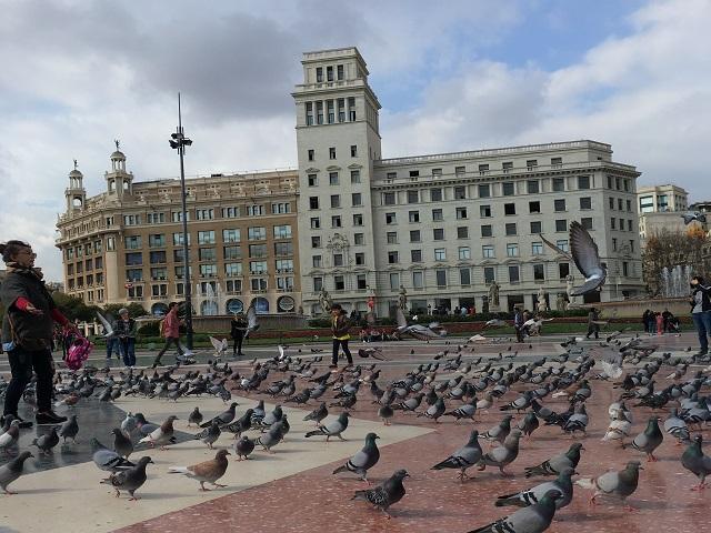 so many pigeons