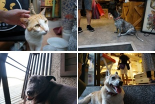 九份にやたらと多い犬や猫たち