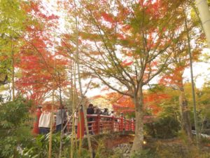 紅葉と竹と橋と
