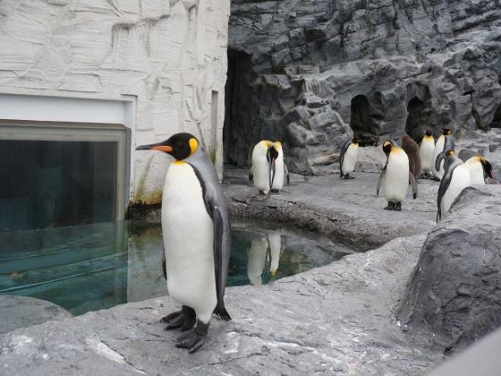 ペンギンショー直前のペンギンたち