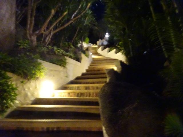 ホテル内の階段