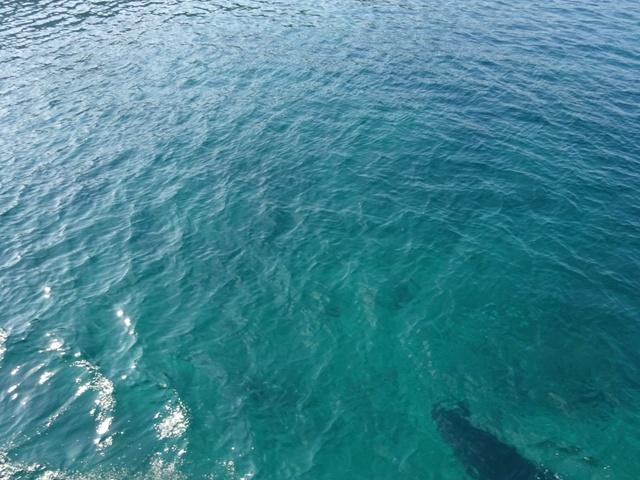 タオ島はこんなに綺麗な海でした