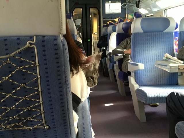 SNCFの様子