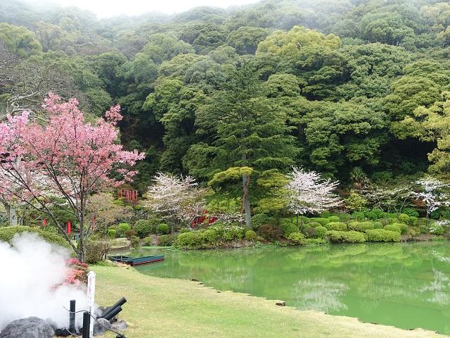 桜が緑に映えて美しい